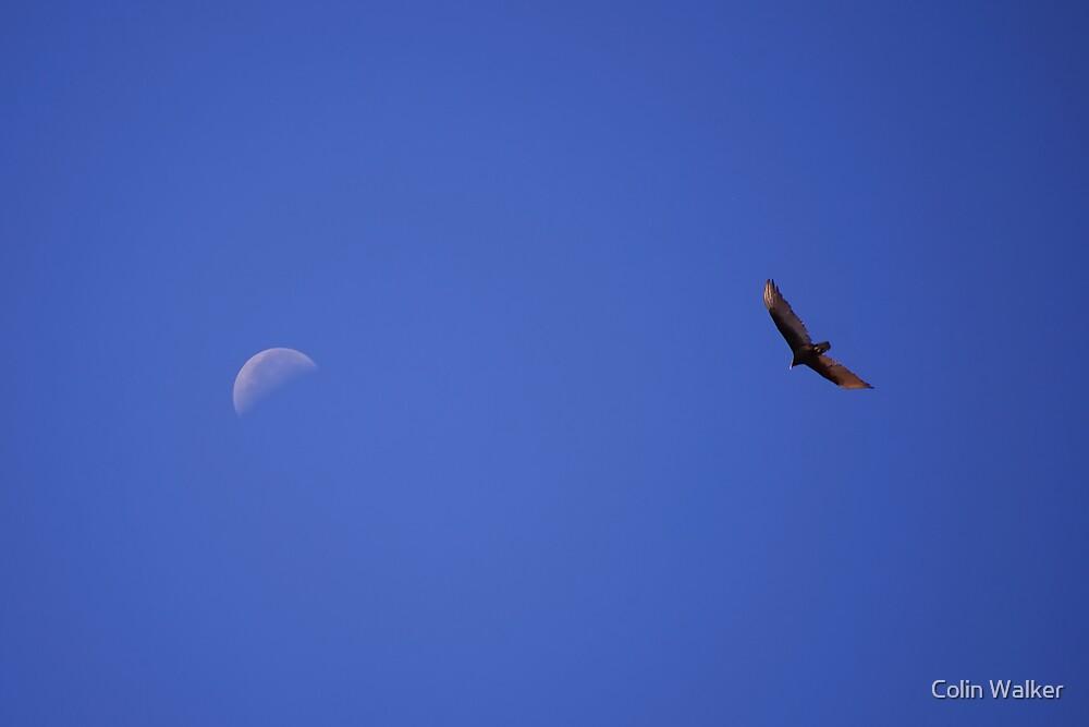 Lonely Sky by Colin Walker