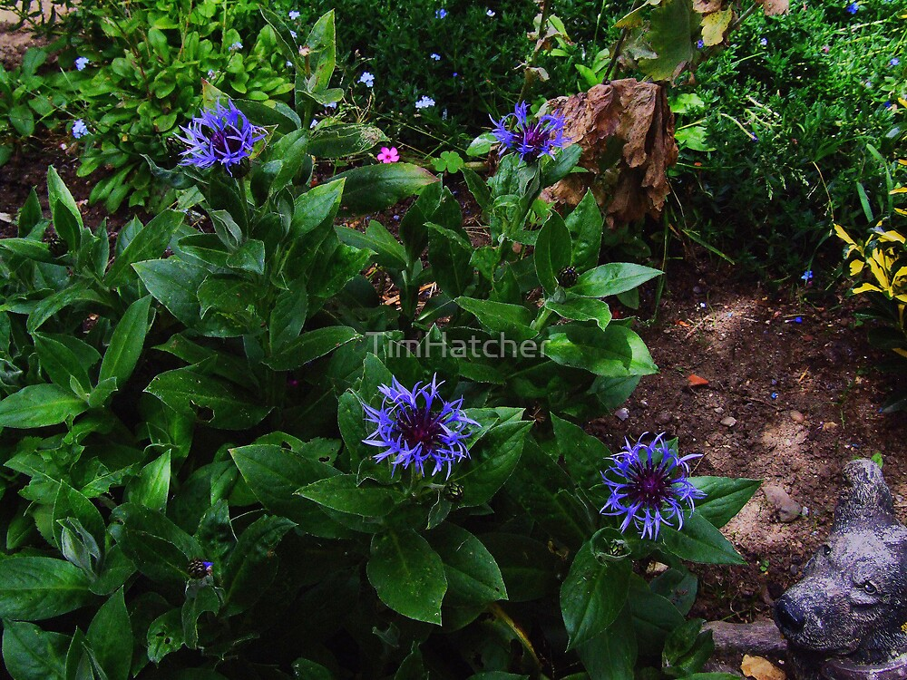 Corn Flowers (with dog) by TimHatcher
