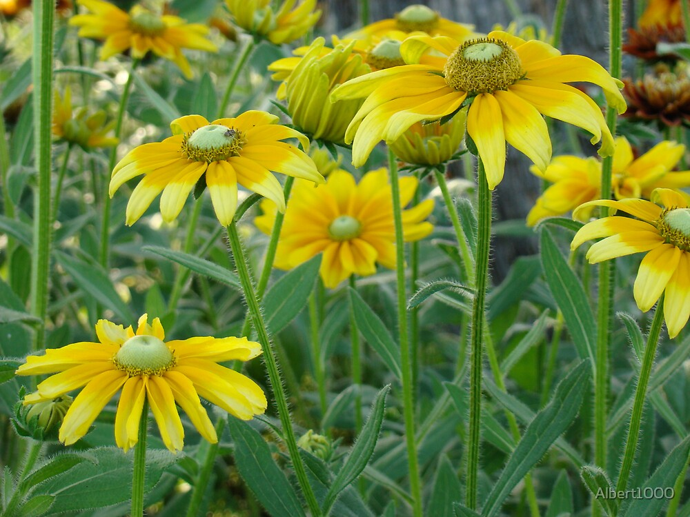 Yellow flowers by Albert1000