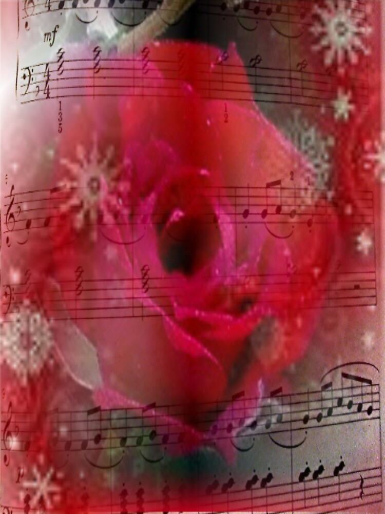 christmas rose by conilouz