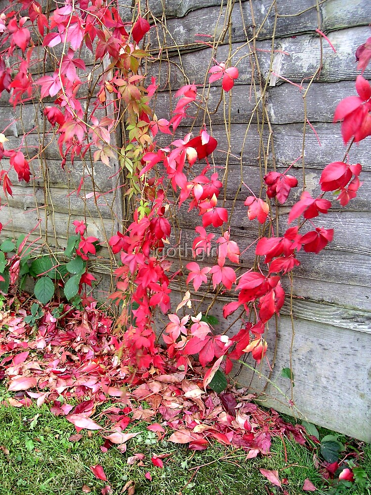 Red leaves by gothgirl