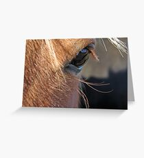 Scotch Extreme Closeup Greeting Card