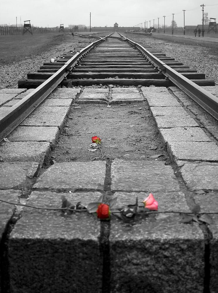 Auschwitz-Birkenau by Martyn Starkey