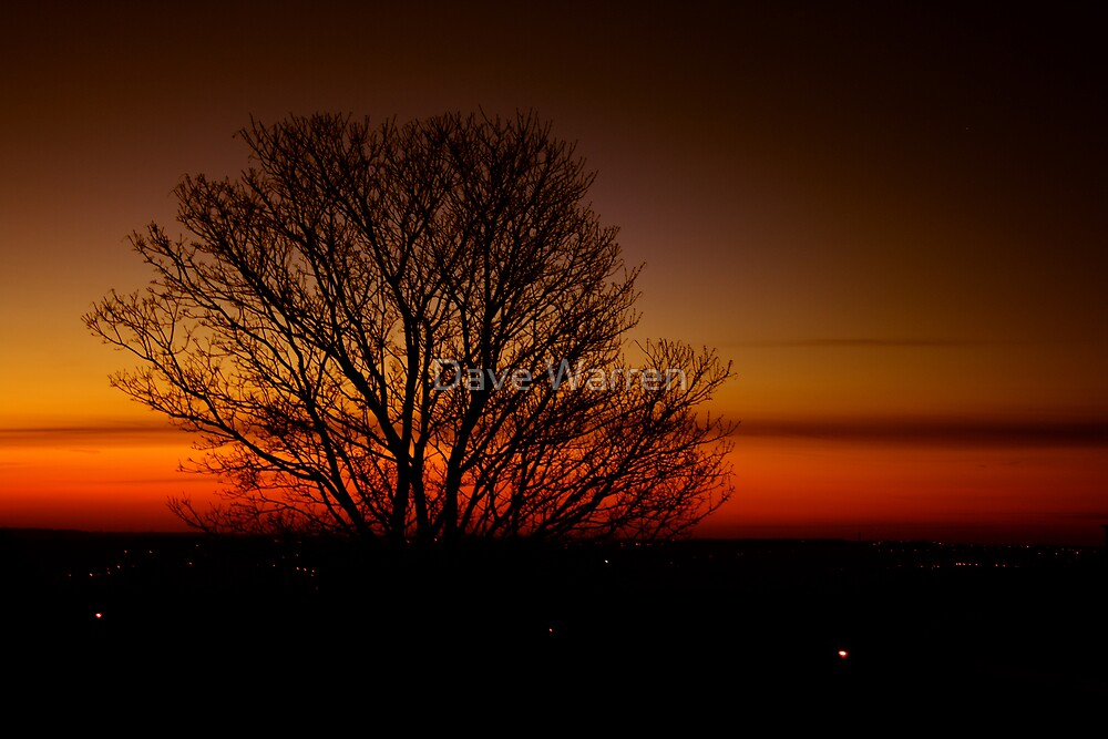 Sunset tree 1 by Dave Warren