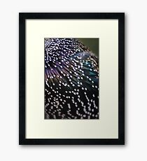 DARK AND LIGHT FEATHER - animal collection Framed Print