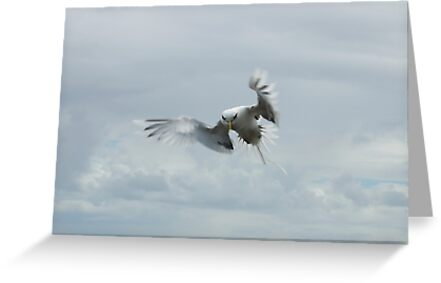 white tailed tropicbird by pjm123