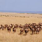 Migration by Steve Bulford