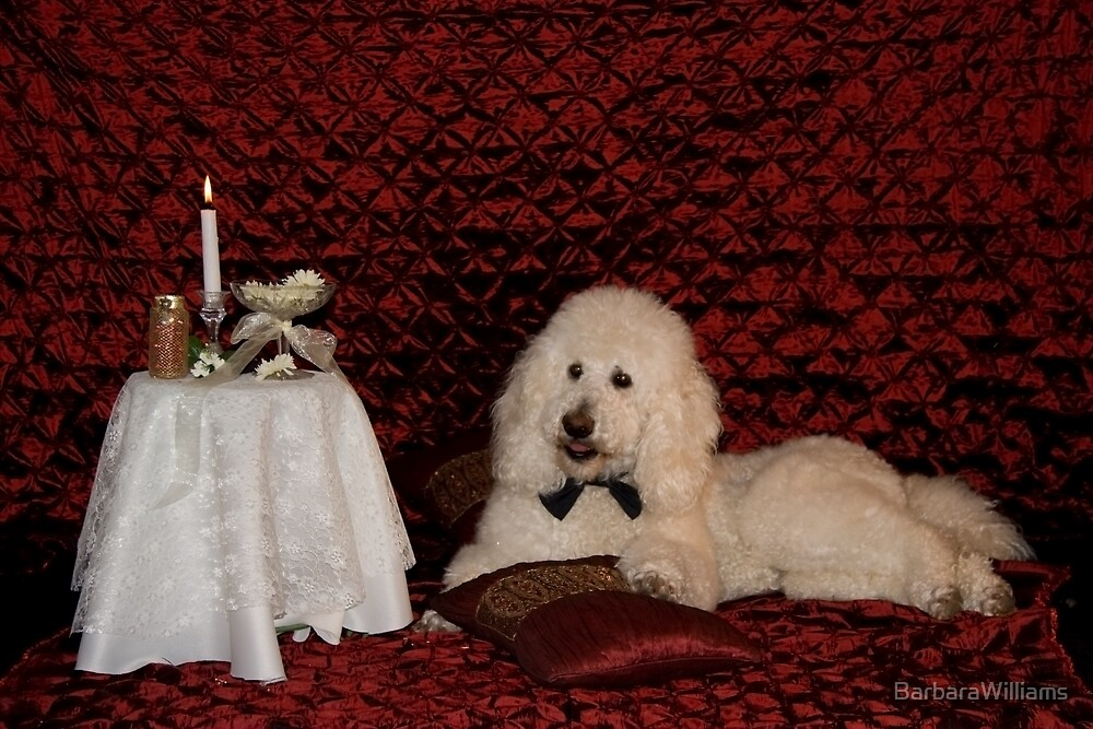 Bailey(Looking for Love) by BarbaraWilliams