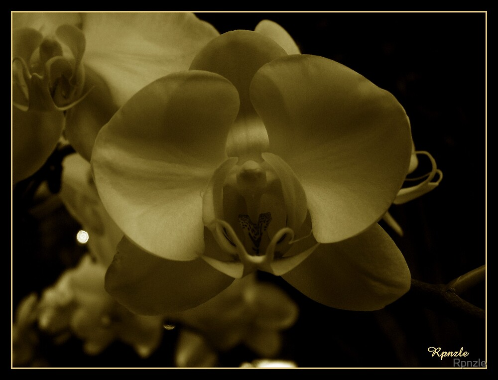 White Orchid~Sepia-Toned by Rpnzle