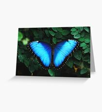 Elusive Blue Morph Greeting Card