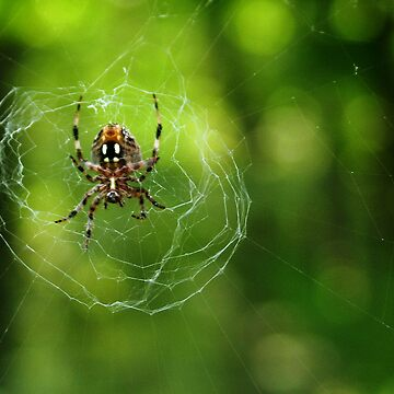 Spider On Its Web by BCStevens