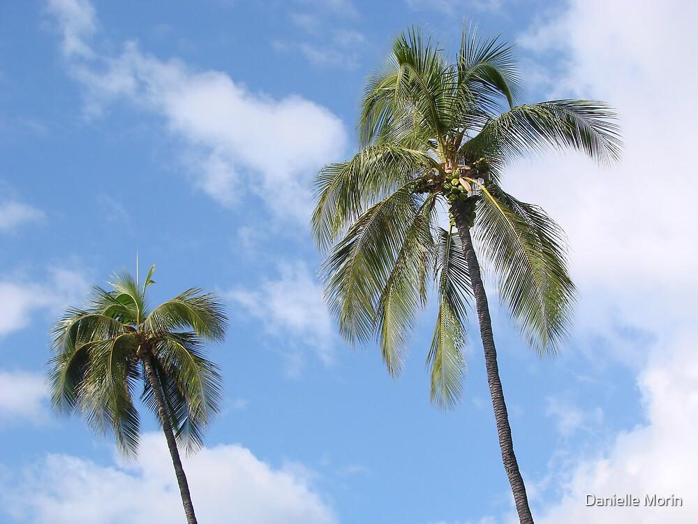 Palms by Danielle Morin