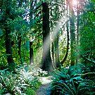 Go Toward The Light by Jan Cartwright