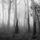 Mountain Ash Trees in Mist 1 by Geoff Smith
