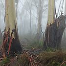 Mountain Ash Trees in Mist 4 by Geoff Smith