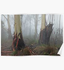 Mountain Ash Trees in Mist 4 Poster