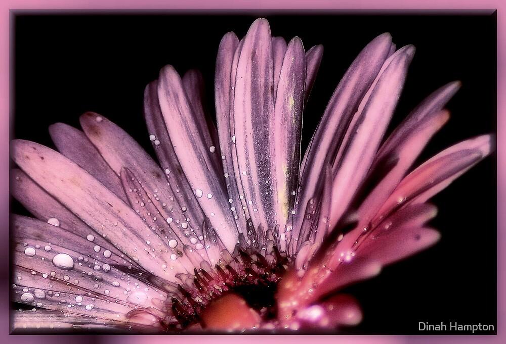 Magical Purple by Dinah Hampton