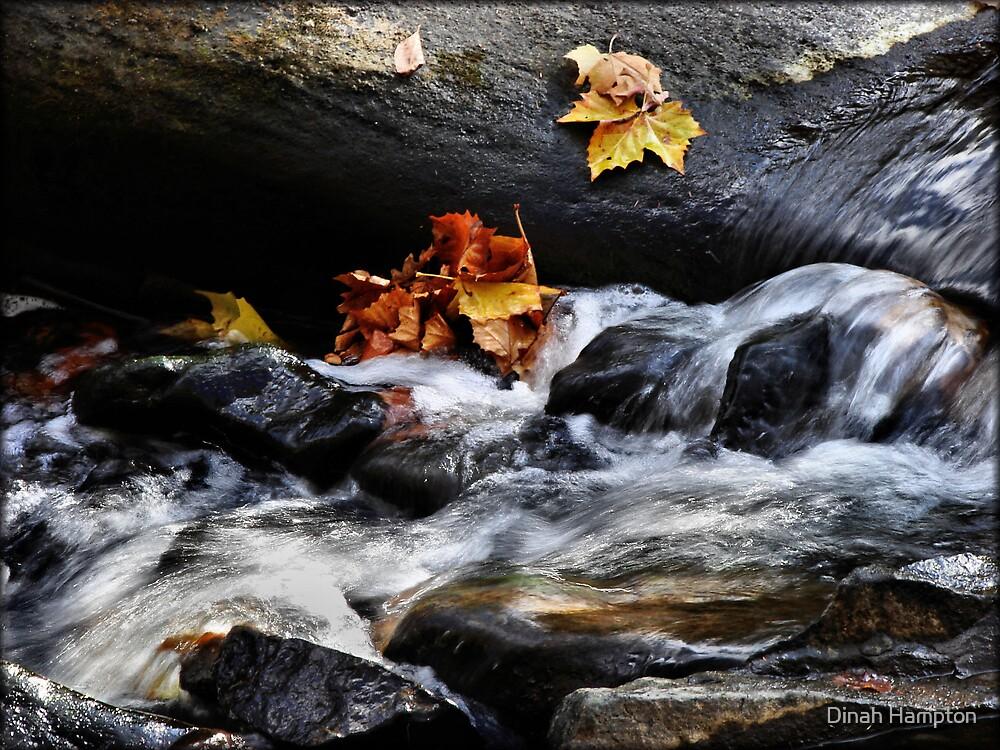 Guest River Gorge by Dinah Hampton