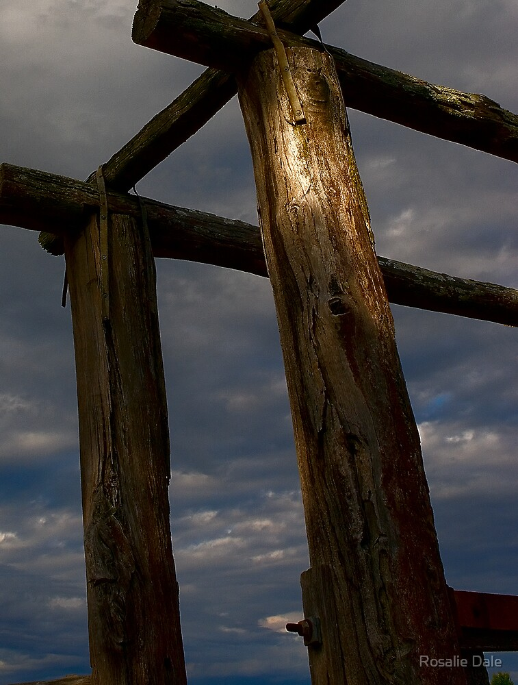 Evening at the cattle yards . . . by Rosalie Dale