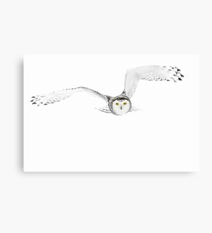 Eyes on the prize - Snowy Owl Canvas Print