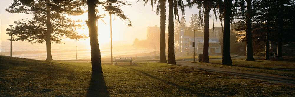 'Morning Mist' by Adam Crews