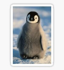 Cute penguin photography  Sticker
