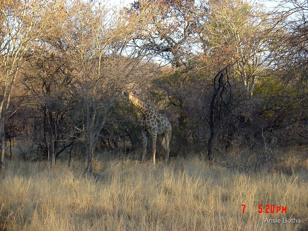 The Wilds by Ansie Botha