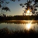 Morning Bayou Reflections by Jonicool