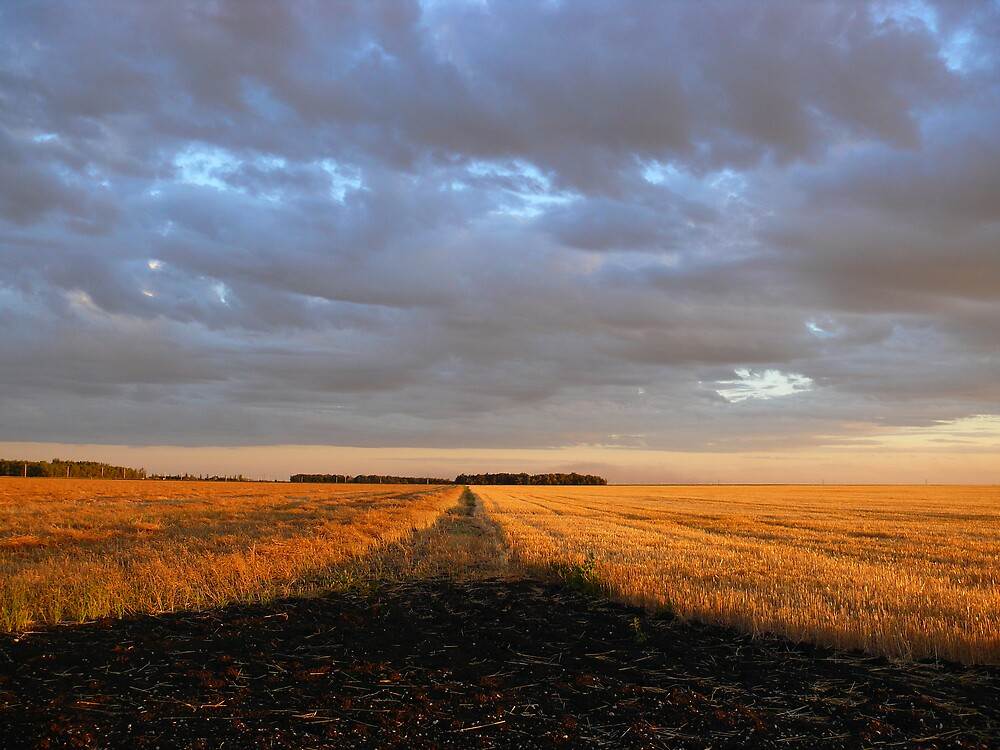 Sunset Harvest Country Road by Geoffrey