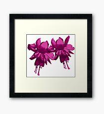 purple fuchsia Framed Print