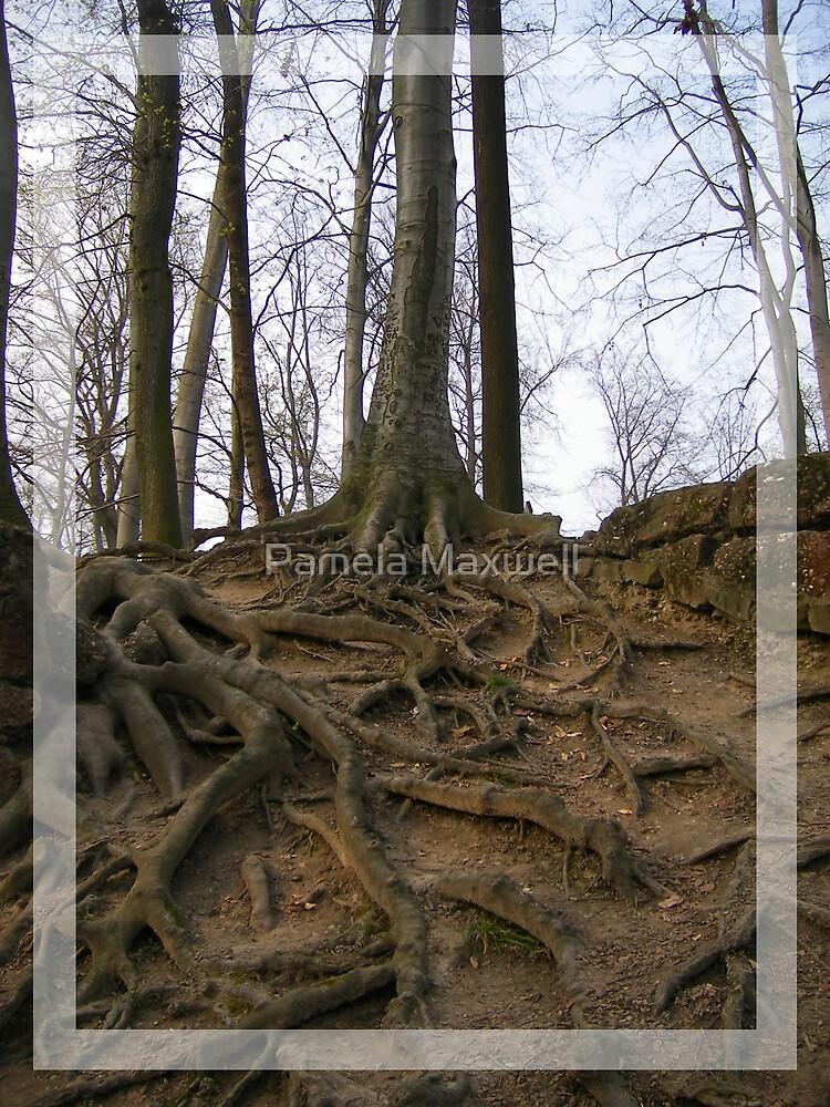 Roots by Pamela Maxwell