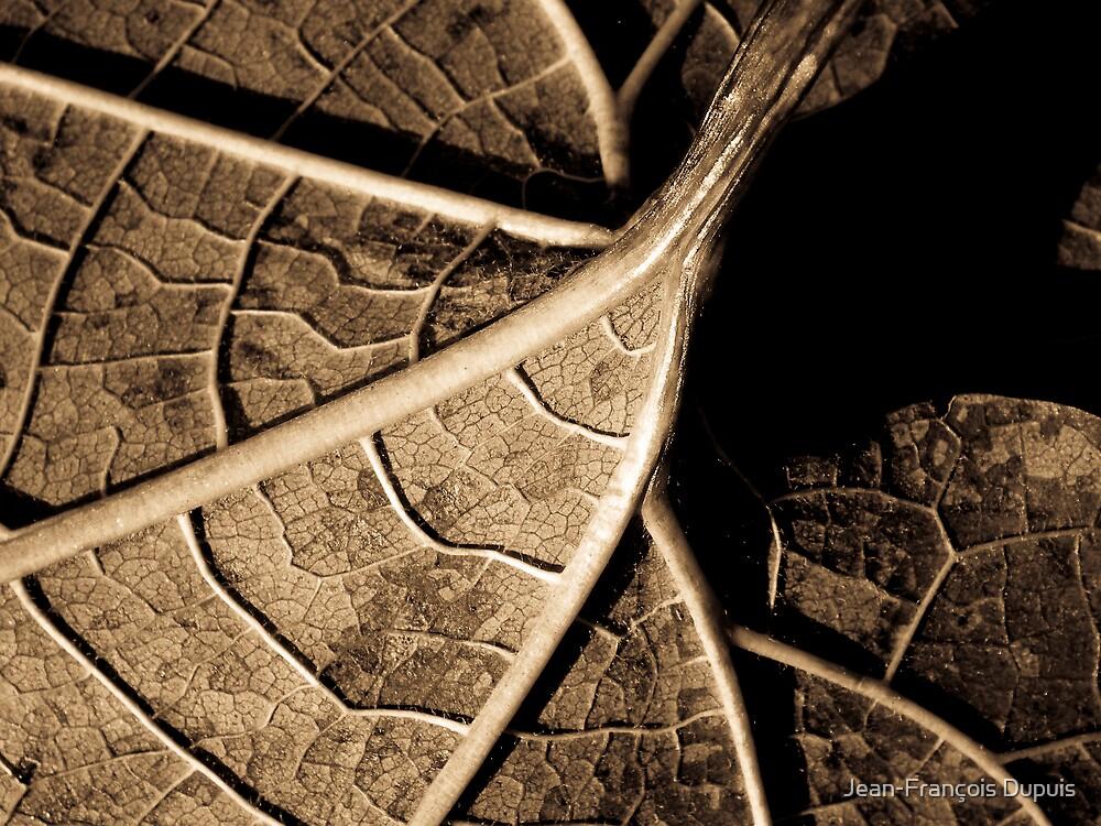 Sepia leaf by Jean-François Dupuis