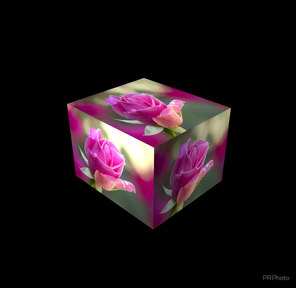 Roses in a box by PRPhoto