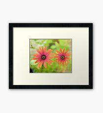 Orange flowers Framed Print