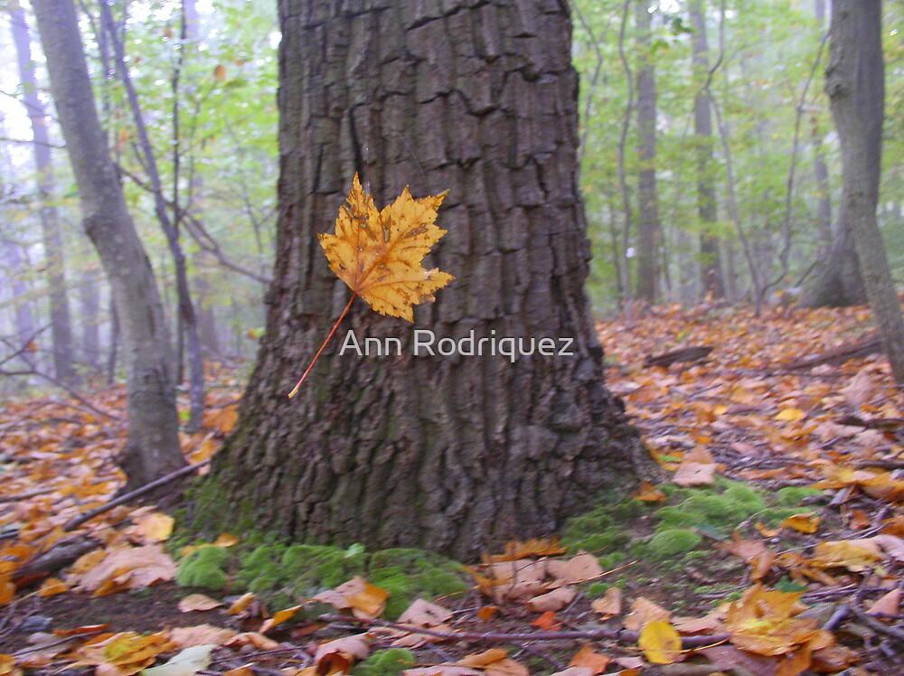 To Catch a Falling Leaf... by Ann Rodriquez