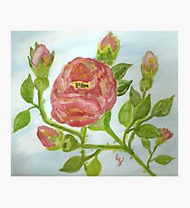 """a wild red rose """"girls rooms""""  Photographic Print"""