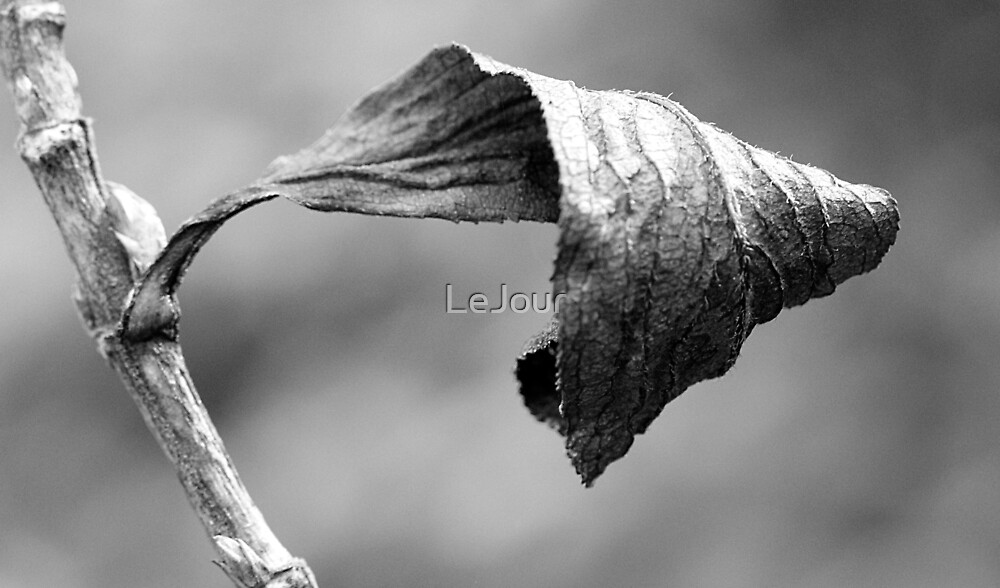 Wrinkled by LeJour
