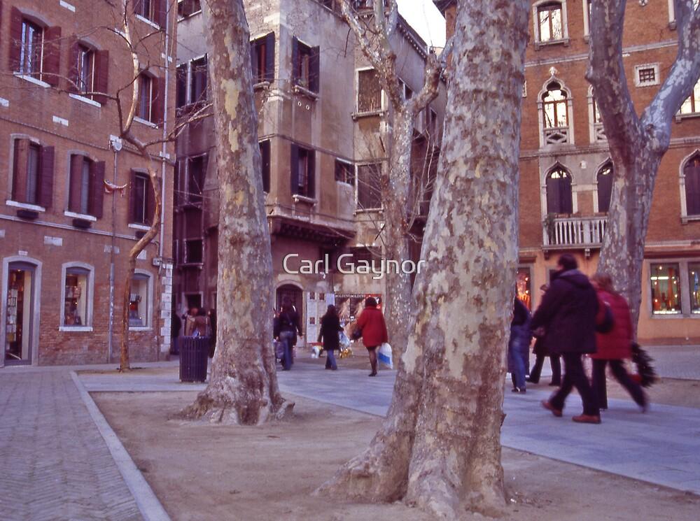 Walkway in Spring - Venice  by Carl Gaynor