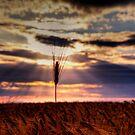 Celestial  by aka-photography