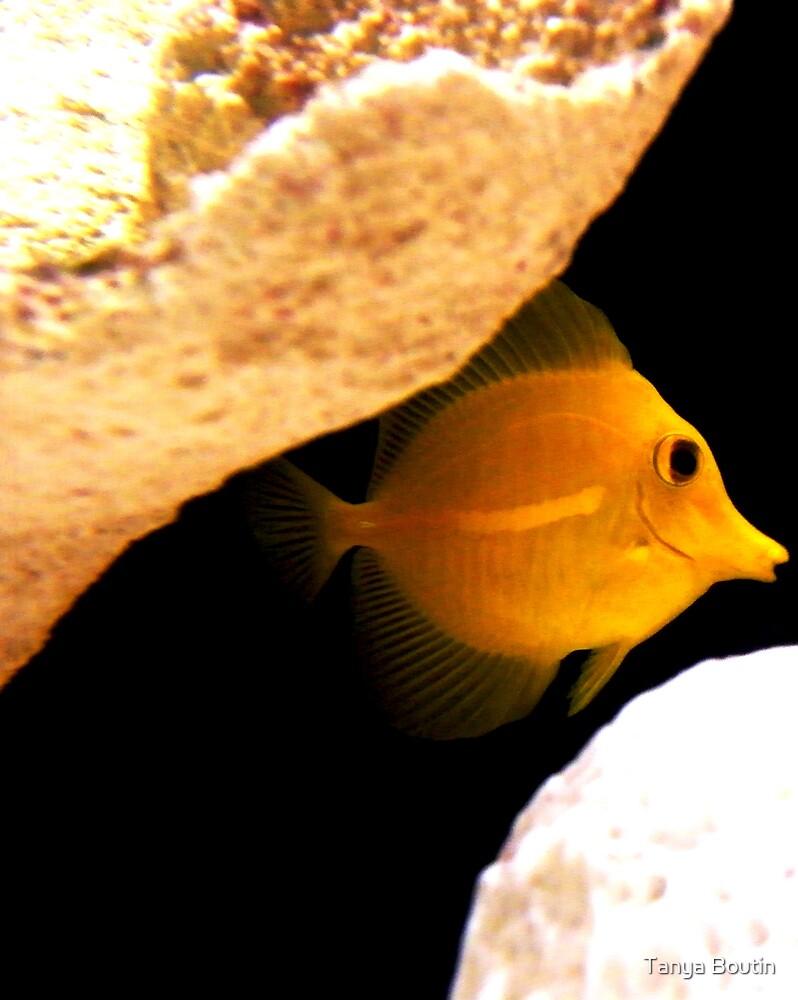 Fish by Tanya Boutin