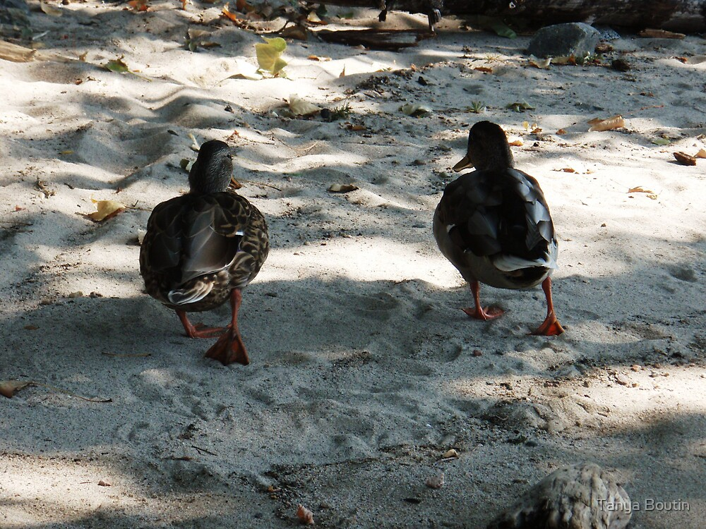 Duck Couple by Tanya Boutin