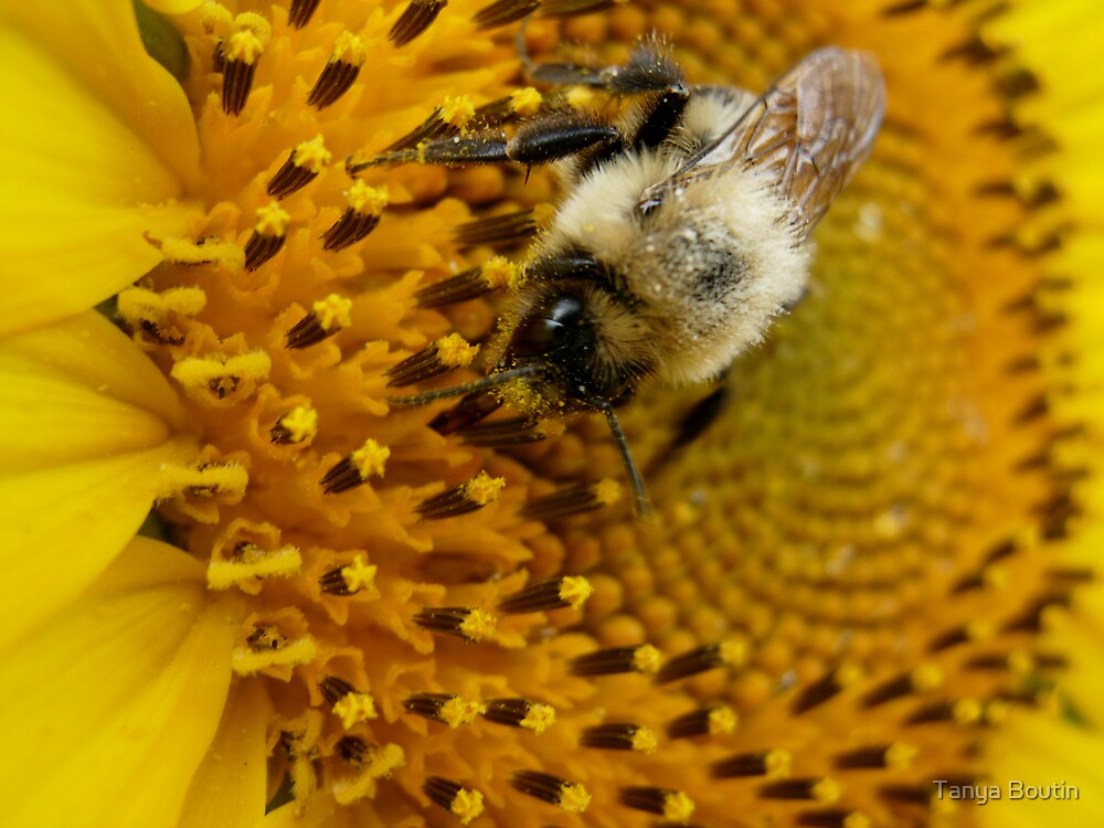 Bee Pollination by Tanya Boutin