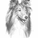 sheltie drawing by Mike Theuer