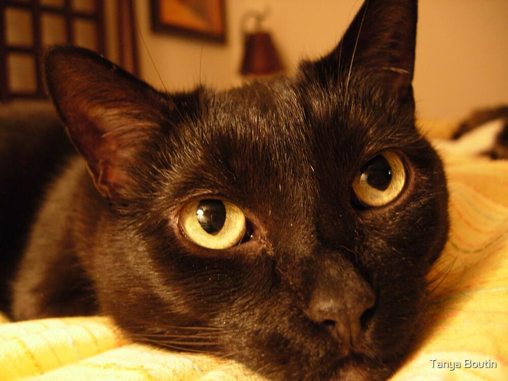 Cat Eyes by Tanya Boutin