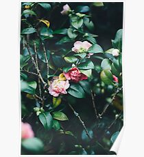 Red and pink flowers Poster