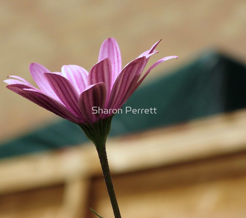 Uplifting by Sharon Perrett