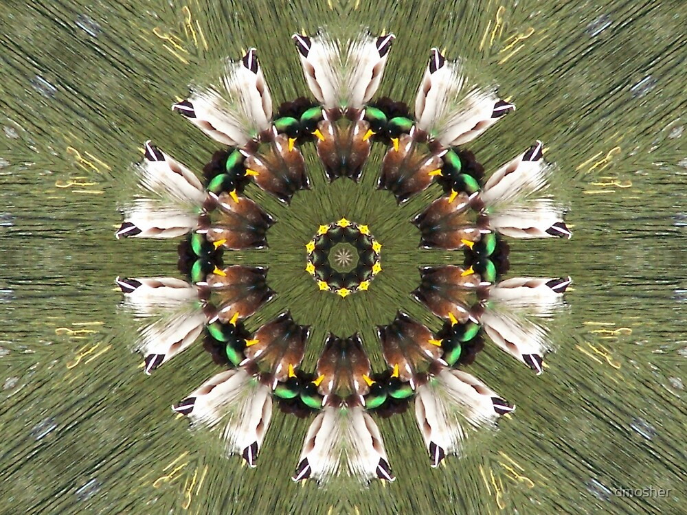 Tribal Feathers by dmosher
