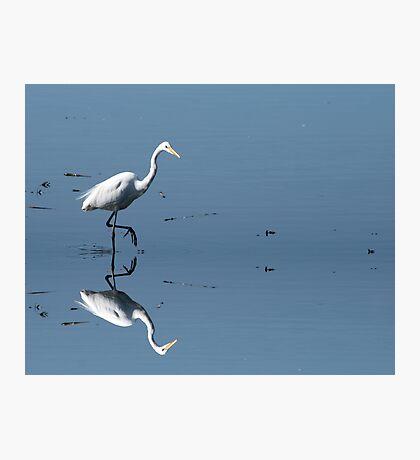 Great Egret Photographic Print