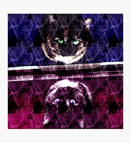 Abstract Cat Photographic Print