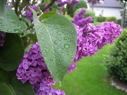 Just after the rain by Pamela Maxwell